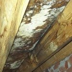 mold and mildew on crawlspace ceiling in Alabama