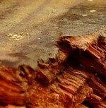 closeup of rotting wood