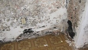 Photo of house with severe mold damage on floor and walls.