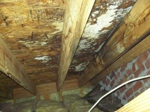 mold removal crawl space