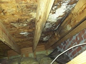 Photo of crawlspace mold on wooden ceiling in brick crawlspace