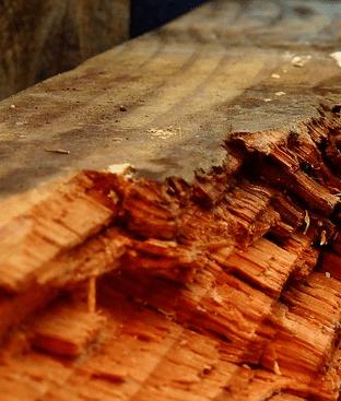 closeup of beam wood rot in Alabama crawlspace