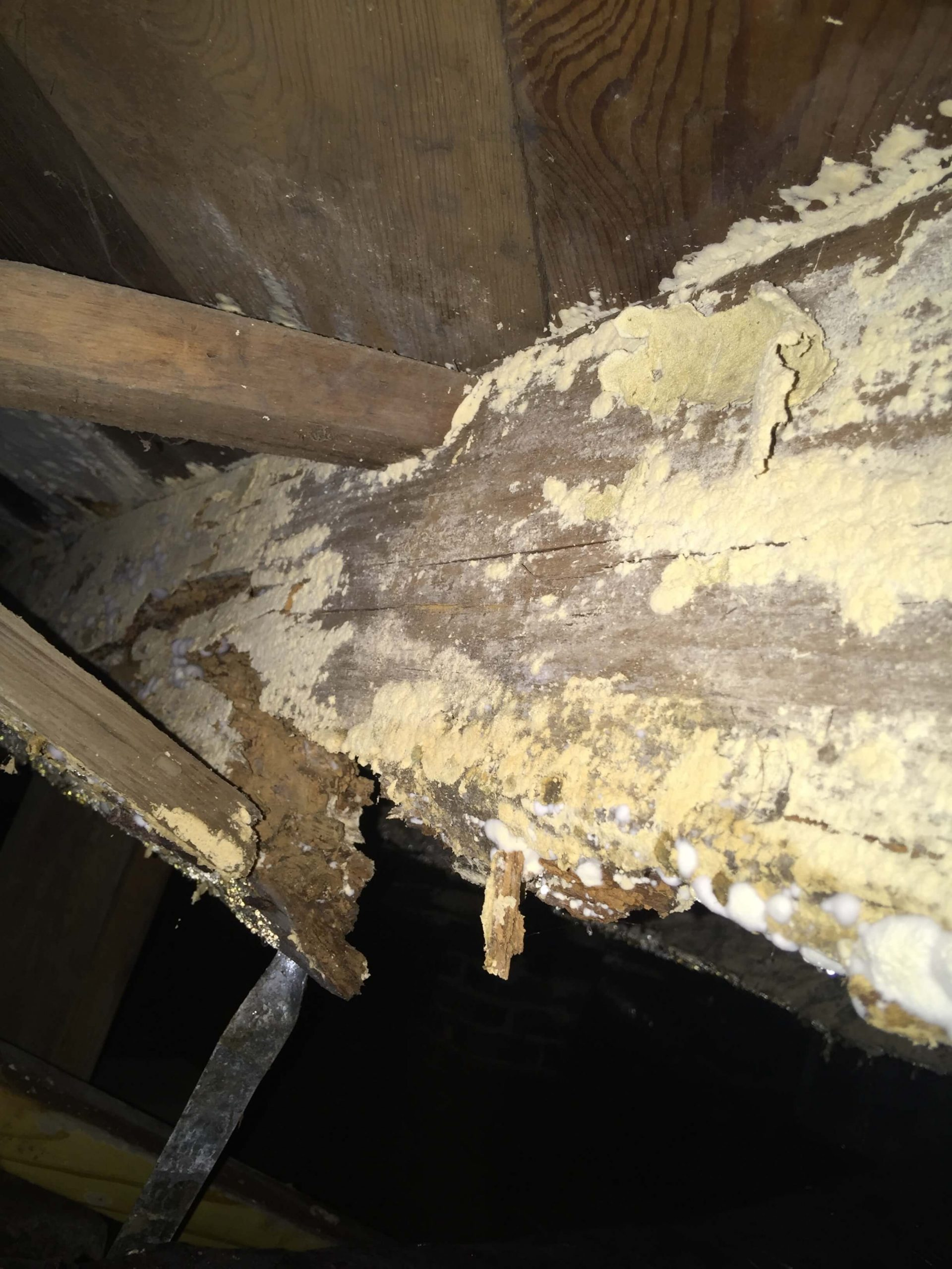 Crawlspace Fungus on Joist