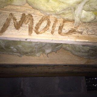 Crawlspace Mold