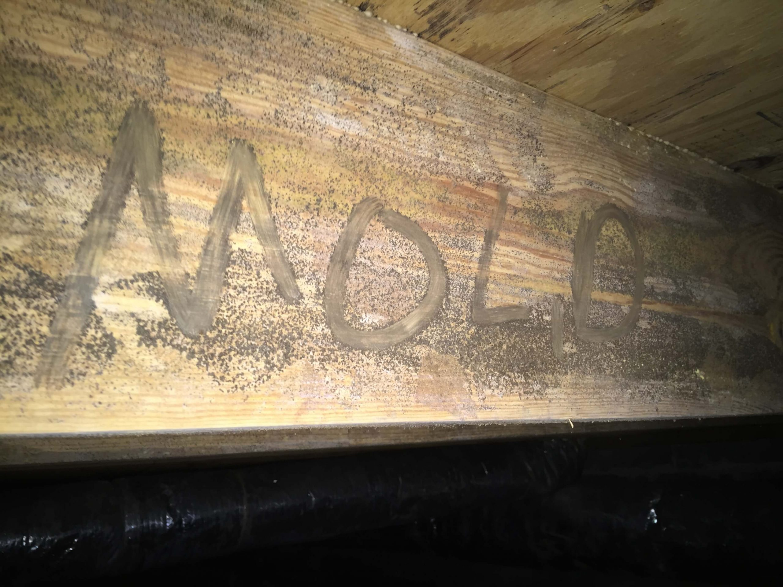 Mold on Crawlspace Joist